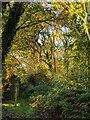 TF0820 : Morning sunlight by Bob Harvey