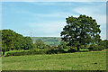 SJ9067 : Pasture near Bosley in Cheshire by Roger  Kidd
