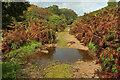 SX7278 : Track below Chinkwell Tor by Derek Harper