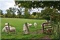 NT6516 : Sheep by the stile, Kersheugh by Jim Barton
