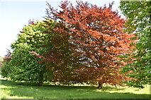 TQ6045 : Somerhill Park by N Chadwick