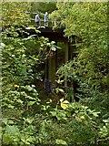 SK5852 : Bridge in Sansom Wood – 5 by Alan Murray-Rust