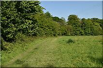 TQ6145 : Tunbridge Wells Circular Walk by N Chadwick