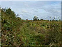 SK7435 : Footpath near Barnstone by Alan Murray-Rust