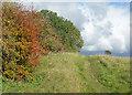 SP3414 : Autumn on Akeman Street by Des Blenkinsopp