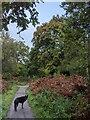 TF0820 : The onset of Autumn by Bob Harvey