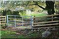 ST2394 : Gated track, Ceefn Rhyswg by M J Roscoe