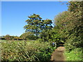 SZ5085 : Red Squirrel Trail near Newport by Malc McDonald