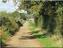 SZ5085 : Red Squirrel and Stenbury Trail near Newport by Malc McDonald