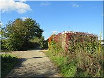 SZ5185 : Red Squirrel and Stenbury Trail near Newport by Malc McDonald