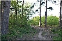 TQ6143 : Pembury Walks by N Chadwick
