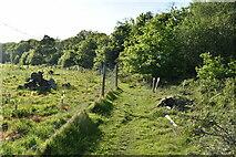 TQ6142 : Footpath by Well Wood by N Chadwick