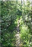 TQ6042 : Wooded footpath by N Chadwick