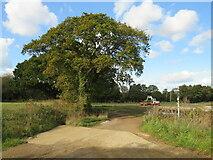 SZ5383 : Red Squirrel Trail near Godshill by Malc McDonald