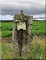 NJ2763 : Fence post below Hill of Meft, Moraysire by Claire Pegrum
