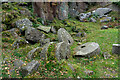 SK2579 : Mill Stones, North End of Padley Gorge by Brian Deegan