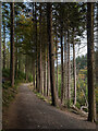 J3332 : Path, Tollymore by Rossographer