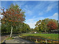TQ3377 : Autumn colours on Chandler Way, North Peckham by Malc McDonald