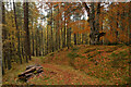NC4703 : A Footpath in Autumn at the Rosehall Forest Trails, Sutherland by Andrew Tryon
