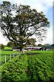 NY5246 : Towngate Farm by Andy Waddington