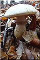 NJ2850 : Fungus by Anne Burgess