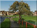 SE2534 : Crabapple tree on Raynville Rise by Stephen Craven