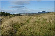 NJ5145 : Field Path by Anne Burgess