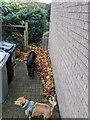 TF0820 : Autumn leaves by Bob Harvey
