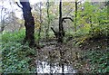 NZ1148 : Little pond in High House Wood by Robert Graham