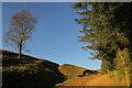 NT9616 : Bridleway above Linhope by Derek Harper