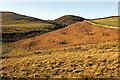 NT9715 : Hillside, Breamish valley by Derek Harper