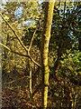 TF0820 : Autumn light by Bob Harvey