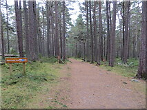 NH9718 : Abernethy Reserve - Woodland path leading to Loch Garten by Peter Wood