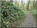 SK3523 : Hart's tongue fern, Ticknall limeyards by Christine Johnstone