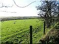 NZ1049 : Grazing field next to the railway path by Robert Graham