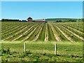 TQ4901 : Vineyards and Flint Barn at Rathfinny Wine Estate by PAUL FARMER