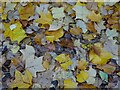 SO7745 : Autumn leaves in Priory Park by Philip Halling