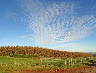 NT5363 : Autumn Scene at Blinkbonny by Adam Ward