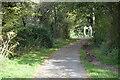 TQ5805 : The Cuckoo Trail by N Chadwick