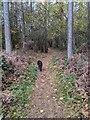 TF0820 : Autumnal path by Bob Harvey