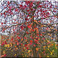 TQ2780 : Autumn Leaves on the bank of The Serpentine, Hyde Park by Roger Jones