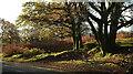 SX7072 : Trees near Leusdon Common by Derek Harper