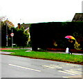 ST3091 : Colourful umbrella, Almond Drive, Malpas, Newport by Jaggery