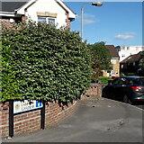 SZ0894 : Winton: Lampton Gardens by Chris Downer
