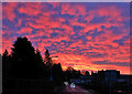 NT4936 : A spectacular sunrise at Galashiels by Walter Baxter