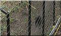 ST5781 : Obscure wolverine, Wild Place by Derek Harper