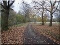 TQ6939 : On the High Weald Landscape Trail by Marathon