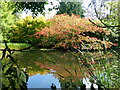 TL4557 : Lake, and colourful shrubs, Cambridge University Botanical Garden by Ruth Sharville