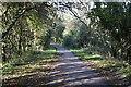 TQ5819 : The Cuckoo Trail by N Chadwick