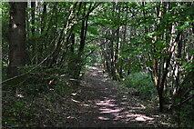 TQ4048 : Great Earls Wood by N Chadwick